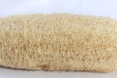 cylindrica: Natural fiber from Luffa Cylindrica Stock Photo