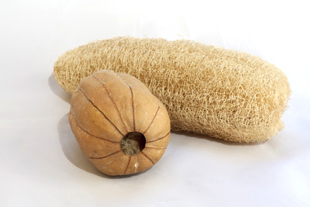 cylindrica: Dry Luffa Cylindrica natural sponge for any cleaning use in the kitchen or for shower