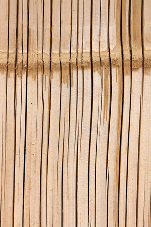 Bamboo natural texture vertical background photo