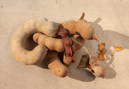 tamarindo: Tamarind en el piso de cemento