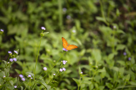 viceroy: Beautiful orange butterfly in the green garden Stock Photo