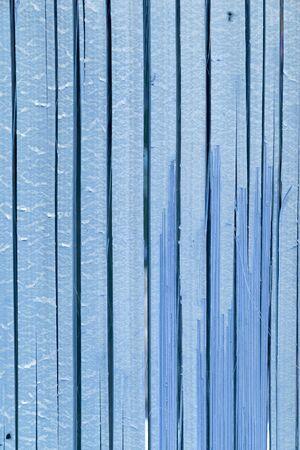 Bamboo texture blue tone photo