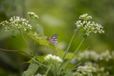 butterfly wings: White butterfly in the garden Stock Photo