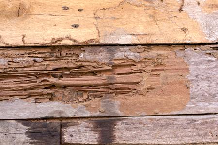 Damage wooden by termite Stock Photo
