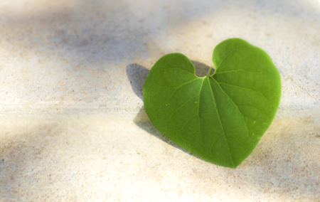 leaf shape: Blur leaf heart shape with space on white cement floor Stock Photo
