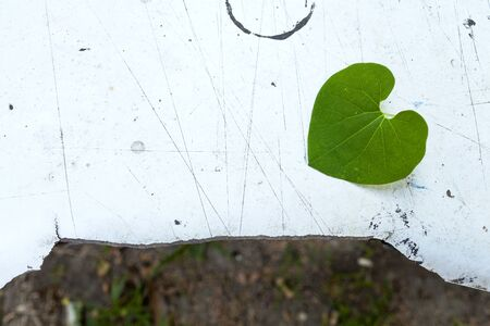 leaf shape: Leaf heart shape with space on old white board