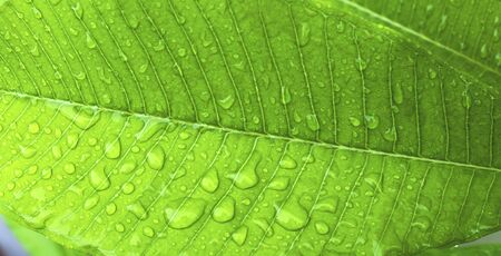 Closeup water drop on green leaf background