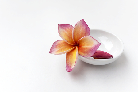 path to romance: Colorful plumeria flower in white cup on white background with selective focus Stock Photo