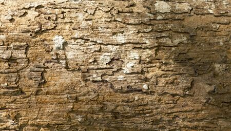 weathered wood: Natural wood texture background