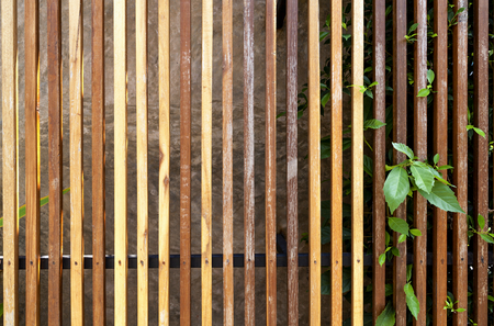 wooden panel: Wooden fence texture and green leaf