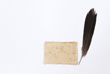 black feather: Natural color card with black feather with space on white background