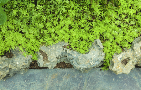 piso piedra: Natural de fondo verde jardín con suelo de piedra Foto de archivo