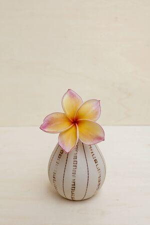 plumeria flower: Plumeria flower vase background Stock Photo