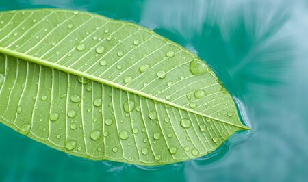 floating in water: Green leaf floating on water