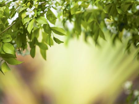 Blur nature green garden background