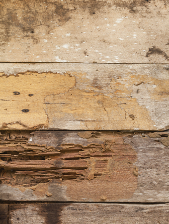 drywood: Termite damage to wooden wall