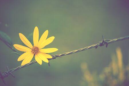 tone on tone: Vintage tone style yellow flower background Stock Photo