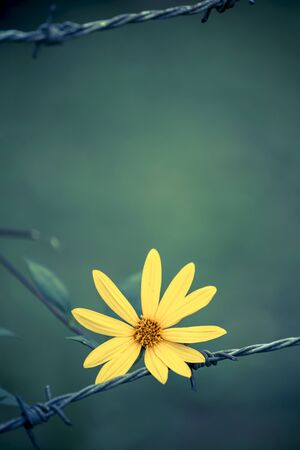 hopeful: Flower on wire fence with space on blur natural green background