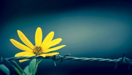 hopeful: Abstract background of Closeup flower on wire fence vintage cool tone