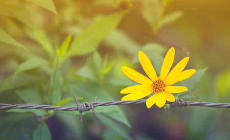 tone: Vintage tone style flower on wire fence