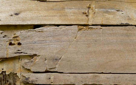 drywood: Damaged wooden wall, eaten by termite