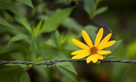 Natural background of fresh yellow flower in green garden