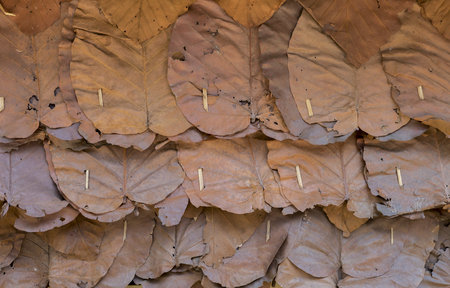 dry leaf: Dry leaf roof background Stock Photo