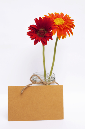 writ: Yellow paper card with red and orange daisy flower on white background