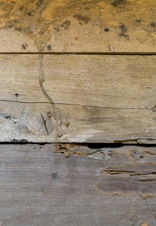 drywood: Termite damage wood wall