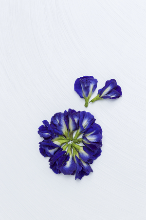 nightshade: Butterfly pea flower on white texture background