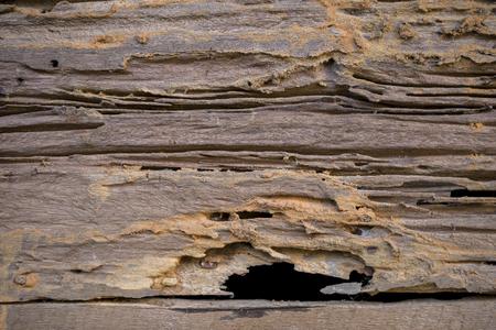 木材、シロアリの被害木造壁の損傷