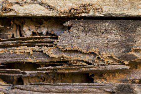 drywood: Damaging wood, termite damage wooden door Stock Photo