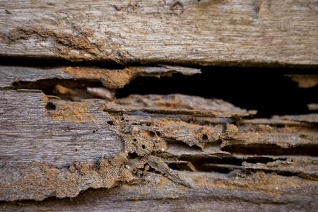 drywood: Closeup damage wood wall, termite damage, selective focus