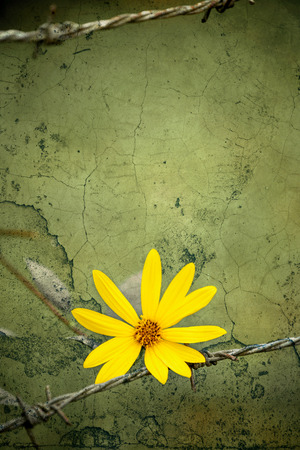 hopeful: Yellow flower the symbol of freedom over vintage grungy crack cement wall texture, vintage tone style Stock Photo