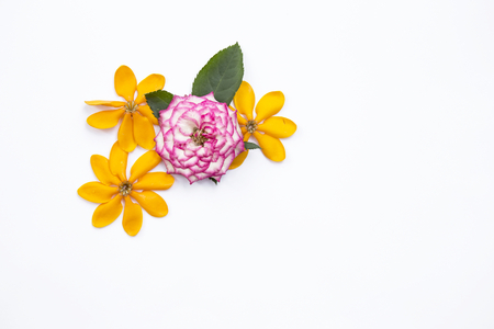 Colorful flower border on white background