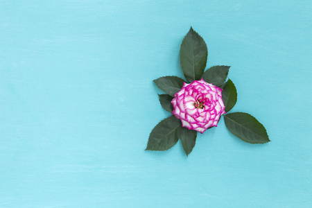is green: Pink rose with green leaf on blue background Stock Photo