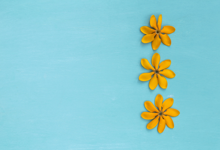 Yellow flower with space on blue background, summer concept background
