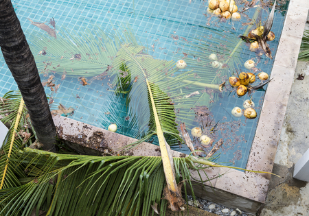 Dirty swimming pool, swimming pool design, coconut leaves and fruit in pool 스톡 콘텐츠