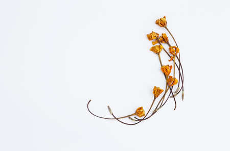Yellow dry flower arrange on white background, card background concept Stock Photo