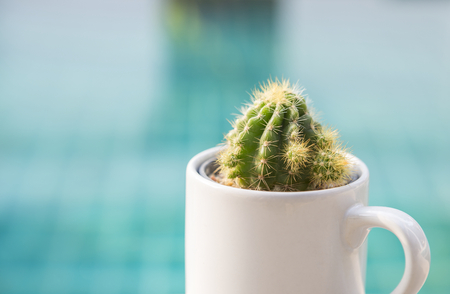 Closeup mini green cactus in white cup over blurred blue swimming pool water background