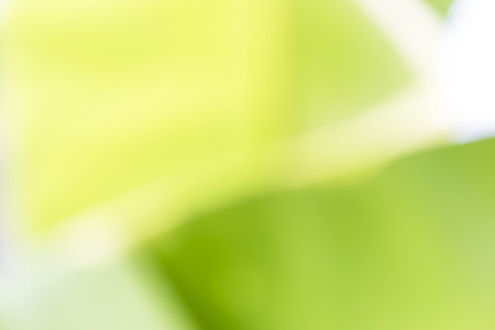 Abstract blurred green banana leaves background, natural green color, outdoor day light Stock Photo