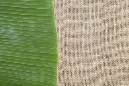 Fresh green banana leaf on hessian fabric texture, natural texture concept background
