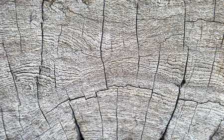 Closeup old wood texture background, natural dry wood texture 写真素材