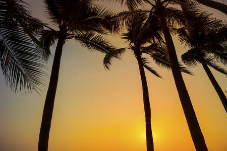 Coucher de soleil sur la plage, lumière du jour en plein air