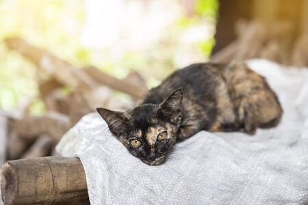 Young cat sleeping on stack of wood over blurred background, Cat resting after meal happily