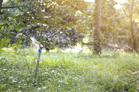 Watering fruit farming in Thailand, sprinkle system in the garden with vintage morning warm light