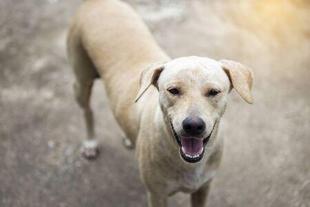 Glimlachende hond die op haar traktatie wacht, gelukkige hond die buiten het huis staat te wachten tot de eigenaar thuiskomt Stockfoto