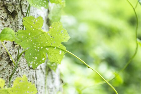 Green leaf growing on the tree over blurred nature green background, outdoor day light, nature background