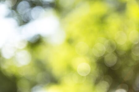 Abstract blurred natural green background, bokeh over green background
