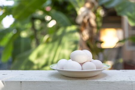 White egg on white cement fence over blurred green garden background, outdoor day light, healthy and diet food, organic egg Stok Fotoğraf